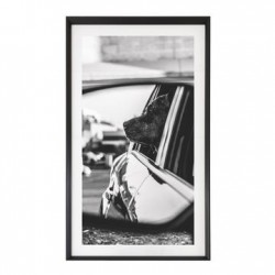 PICTURE FRAME: DOG IN CAR