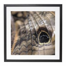 PICTURE FRAME: BUTTERFLY WING